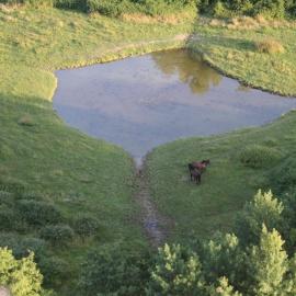 Chevaux de la Dombes