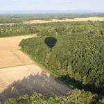 Ombre de la montgolfière sur la forêt